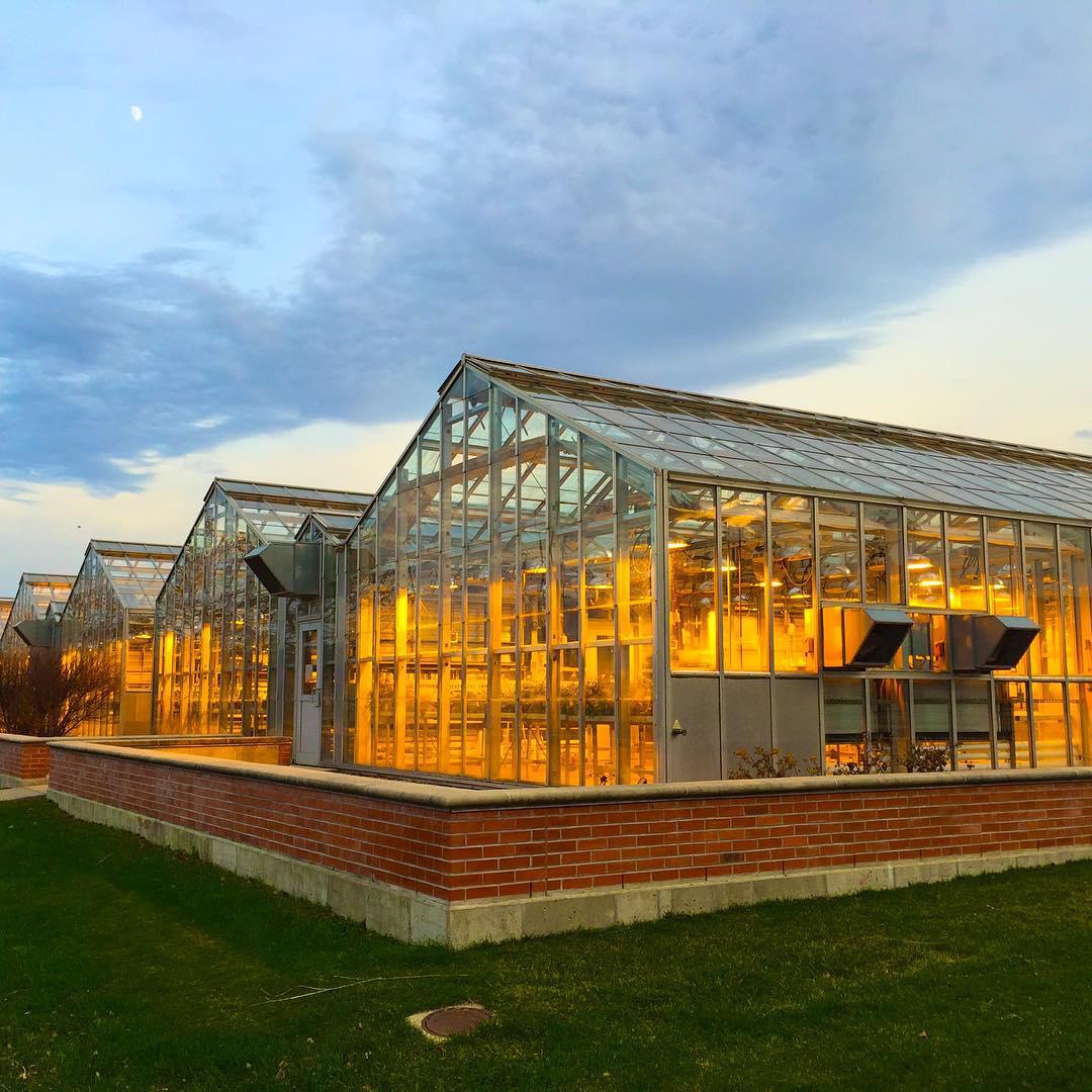 Walnut Street Greenhouses