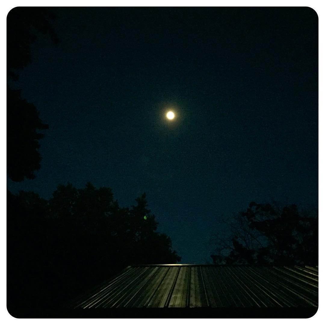 Backyard fireflies