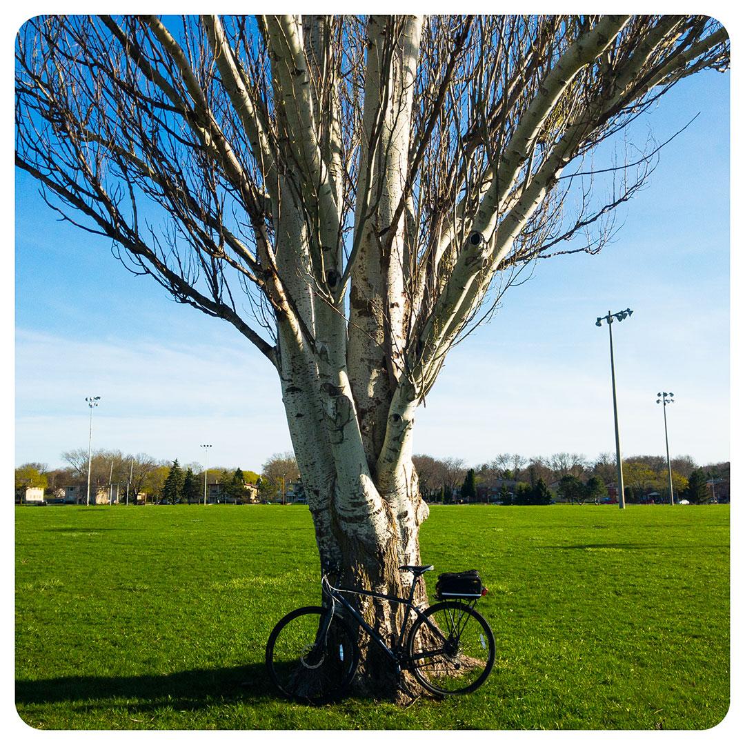 Funnel tree