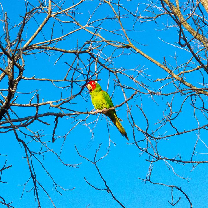 The birds of Spring