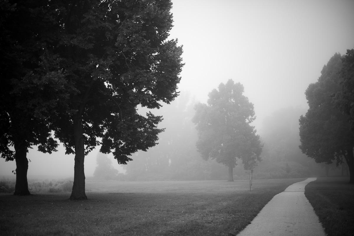 Fog shrouded trees in a park