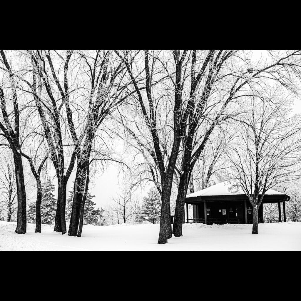 Rime ice at Marlborough Park, Madison, WI